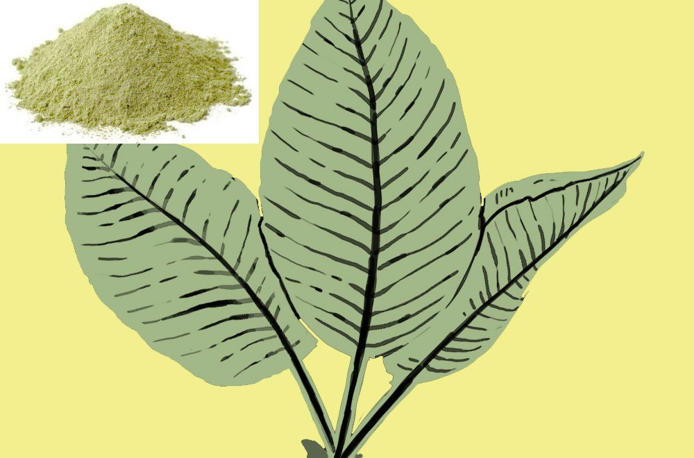 White Dragon Kratom Review