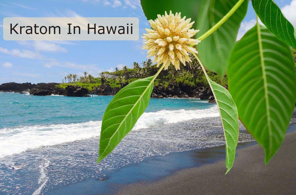 Kratom Hawaii
