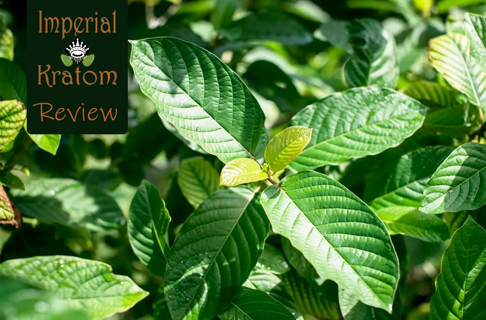 Imperial Kratom Review